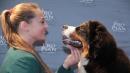 I cani capiscono le nostre frasi </br>e il tono con il quale le pronunciamo