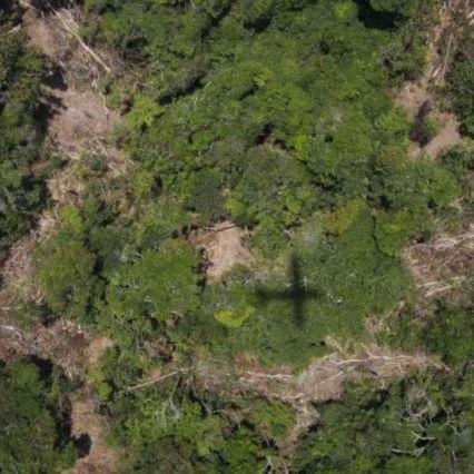 Deforestazione, una foresta delle dimensioni della Grecia scomparsa nel 2018