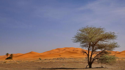 """Clima, presto una barriera verde """"fermerà"""" il deserto in Sudan"""