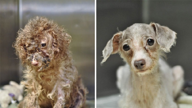 Cani abbandonati, ritorno alla vita