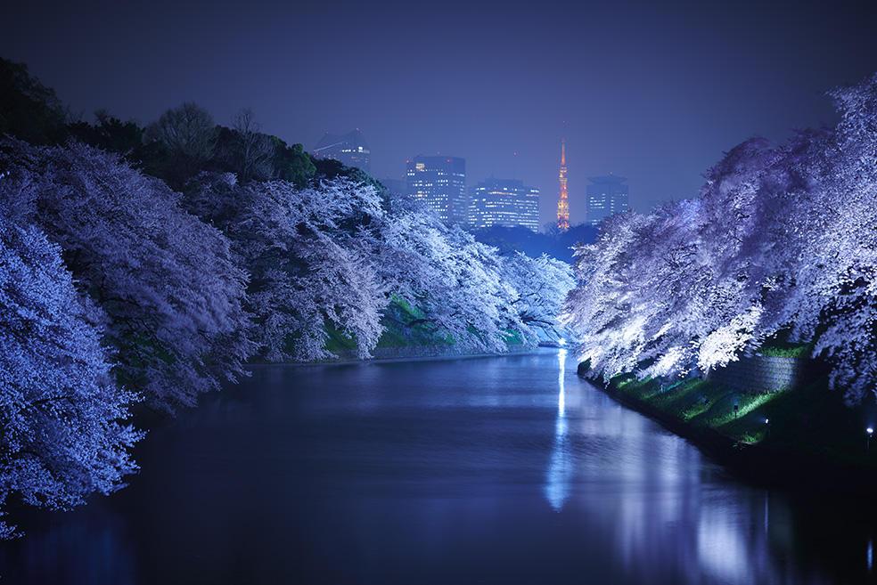 Giappone: la natura dà spettacolo con i ciliegi in fiore