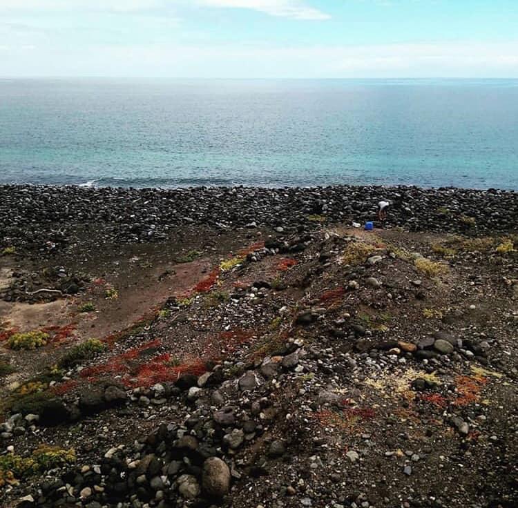 La spiaggia di Tenerife ricoperta di plastica: l'allarme degli ambientalisti