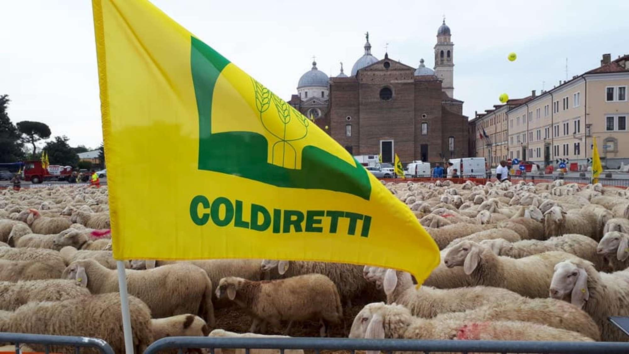 Padova, mille pecore in piazza per protestare contro i dazi di Trump