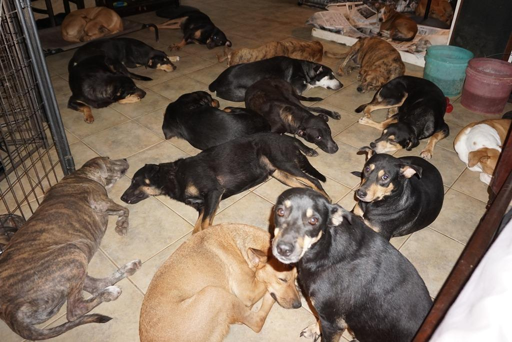 Bahamas, accoglie in casa 97 cani per salvarli dall'uragano Dorian