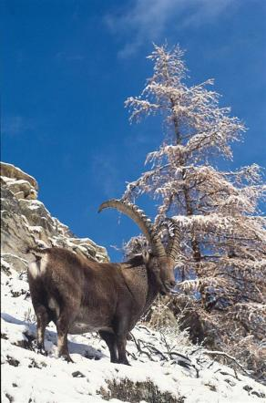 Piemonte: le meraviglie del Gran Paradiso