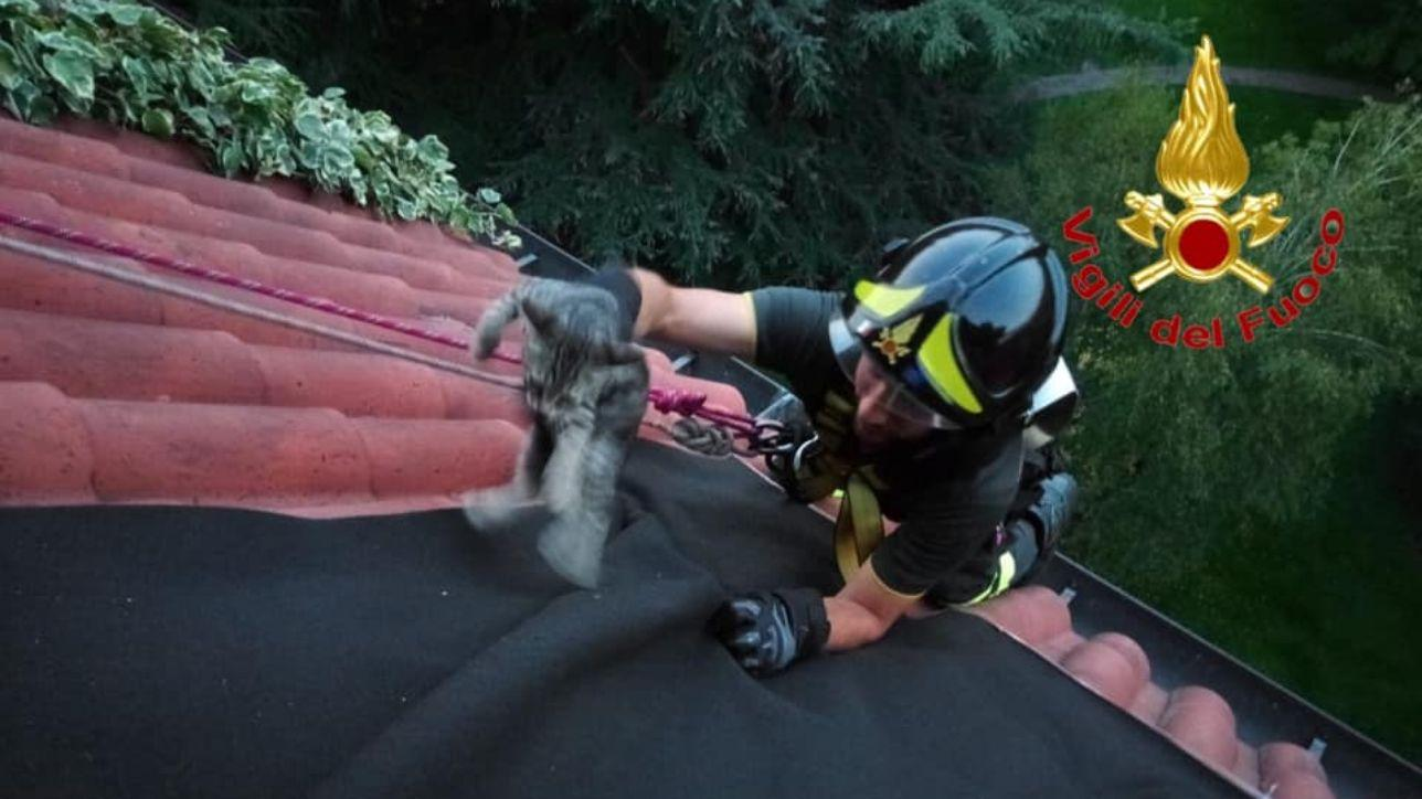 Milano, vigili del fuoco sul tetto per salvare un gattino intrappolato nella gronda del sesto piano
