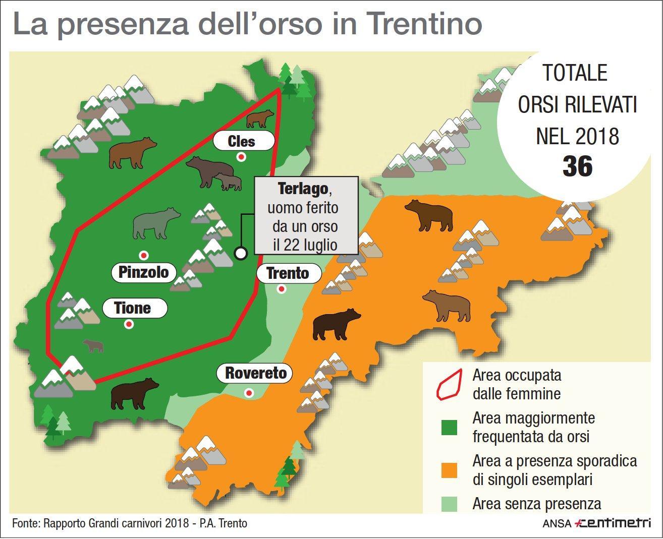 La presenza degli orsi in Trentino Alto-Adige