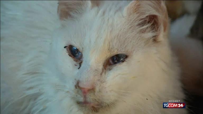 Canada: il santuario dei gatti malati